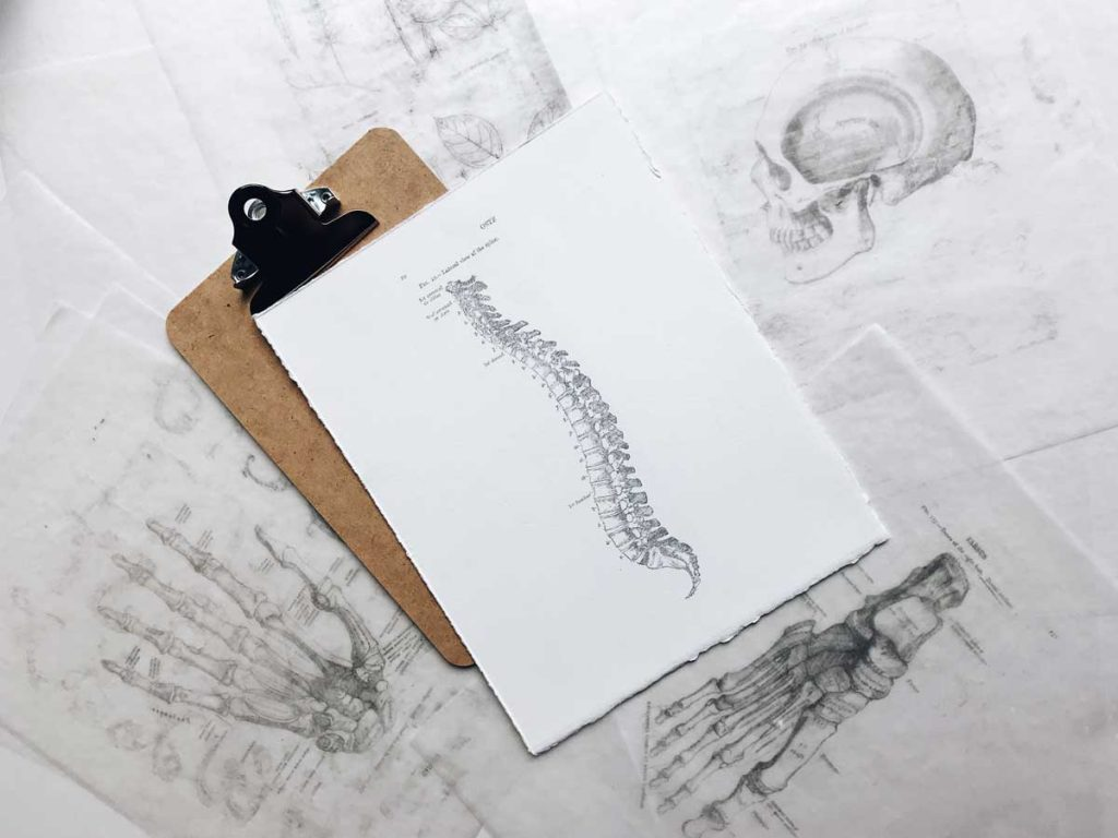 Picture of the spine